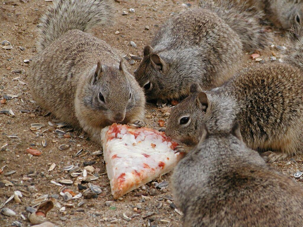 large.pizza-squirrels.jpg.60c78a0425da26