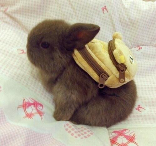 large.58982f48ac67d_Bunnywithbackpack020617.jpg