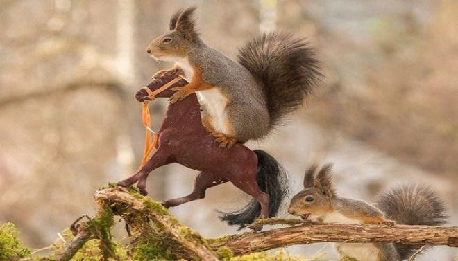 large.593a3d512c240_squirrel-2-Netmarkers-1060917.jpg